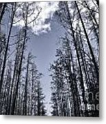 North Woods Forest Metal Print