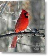 Northern Cardinal 2  Metal Print