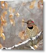 Northern Flicker Woodpecker Metal Print