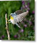 Northern Parula Warbler Metal Print