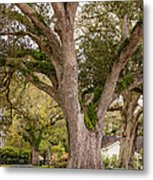 Oak Alley Backyard Metal Print