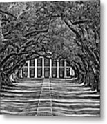 Oak Alley Bw Metal Print