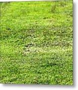 Old Green Grass Metal Print