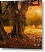 Old Olive Tree Metal Print