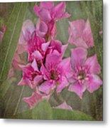 Oleander Cluster Metal Print