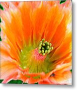 Orange Cactus Flower Metal Print