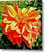 Orange Dahlia On Taquille Island In Lake Titicaca-peru  Metal Print