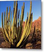 Organ Pipe Cactus Natl Monument Metal Print