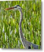 Orlando Wetlands Great Blue Heron Metal Print