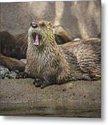 Otter North American  Metal Print