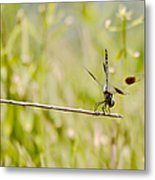 Out On A Twig Metal Print