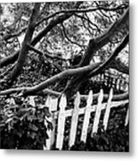 Overflowing A Picket Fence Metal Print