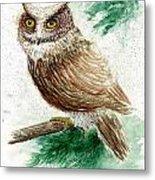 Owl Study Metal Print