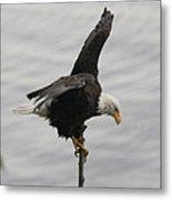 Pacific Northwest Eagle II Metal Print