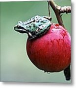 Pacific Tree Frog On A Crab Apple Metal Print