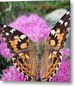Painted Lady Butterfly Up Close Metal Print