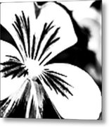 Pansy Flower Black And White 01 Metal Print