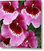 Pansy Orchid 1 Metal Print