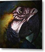 Parrot 9 Metal Print