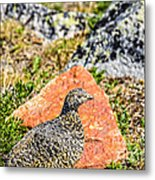 Partridge 2 Metal Print