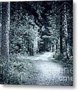 Path In Dark Forest Metal Print by Elena Elisseeva