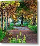 Pathway Through Colorful Forest In Fall Autumn Metal Print