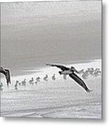 Pelicans Foggy Picnic  Metal Print
