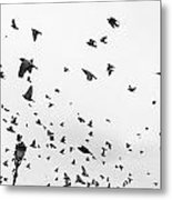 Pigeons In Flight Metal Print