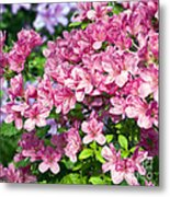 Pink And Blue Rhododendron Metal Print