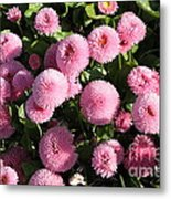 Pink Button Pom Flowers Metal Print