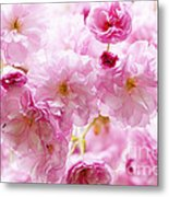 Pink Cherry Blossoms  Metal Print by Elena Elisseeva