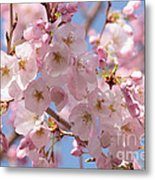 Sunlight On Spring Blossoms Metal Print