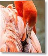 Pink Flamingo At A Zoo In Spring Metal Print