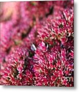 Pink Flower Bouquet Metal Print