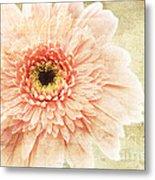1 Pink Painterly Gerber Daisy Metal Print