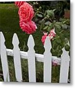 Pink Roses White Picket Fence Metal Print