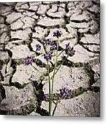 Plant Growing Through Dirt Crack During Drought   Metal Print