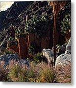 Plants On Landscape, Anza Borrego Metal Print
