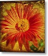Plastered Petals Metal Print