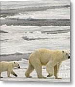 Polar Bear With Cub Metal Print