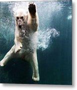 Polarbear In Water Metal Print