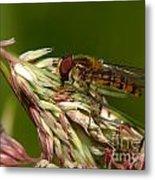Pollinator Metal Print