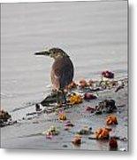 Pond Heron Metal Print