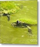 Pond Turtles Metal Print