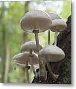 Porcelain Fungus Metal Print