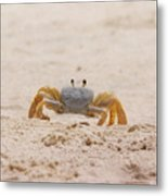 Portrait Of A Ghost Crab Metal Print