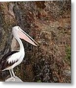 Portrait Of An Australian Pelican Metal Print