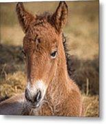Portrait Of Newborn Foal Metal Print