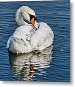 Preening The Feathers Metal Print