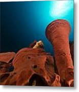 Prickly Tube-sponge And Tropical Reef In The Red Sea. Metal Print